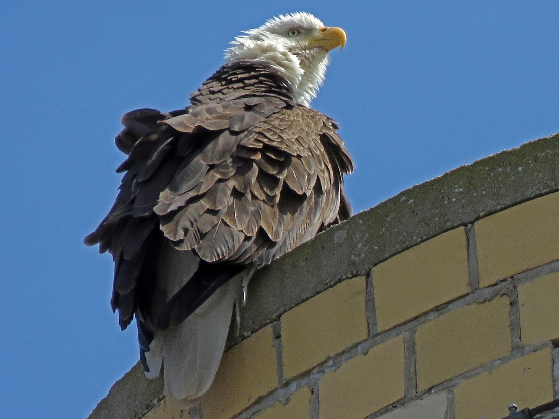 Eagle 1500 4-2-2019 SI 012P.jpg