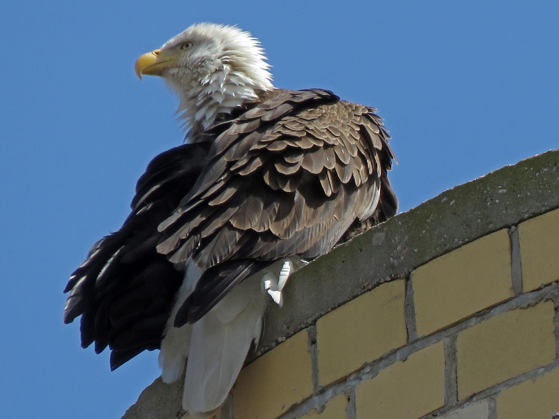 Eagle 1500 4-2-2019 SI 020P.jpg