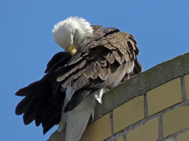 Eagle 1500 4-2-2019 SI 021P.jpg