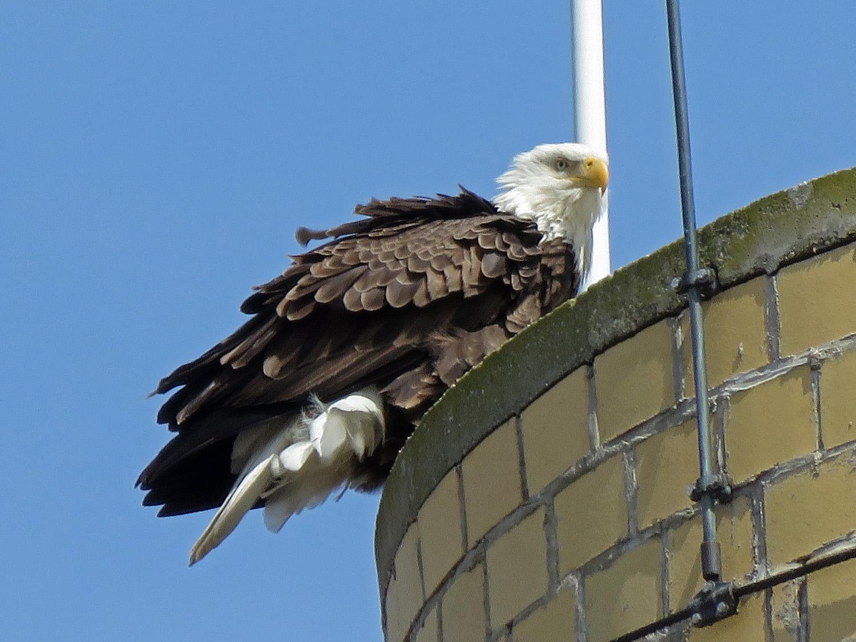 Eagle 1500 4-2-2019 SI 041P.jpg