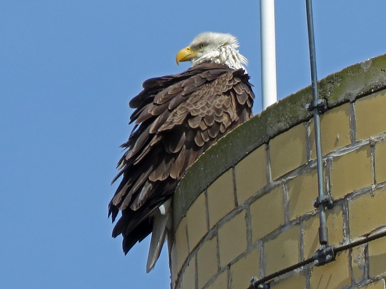 Eagle 1500 4-2-2019 SI 044P.jpg