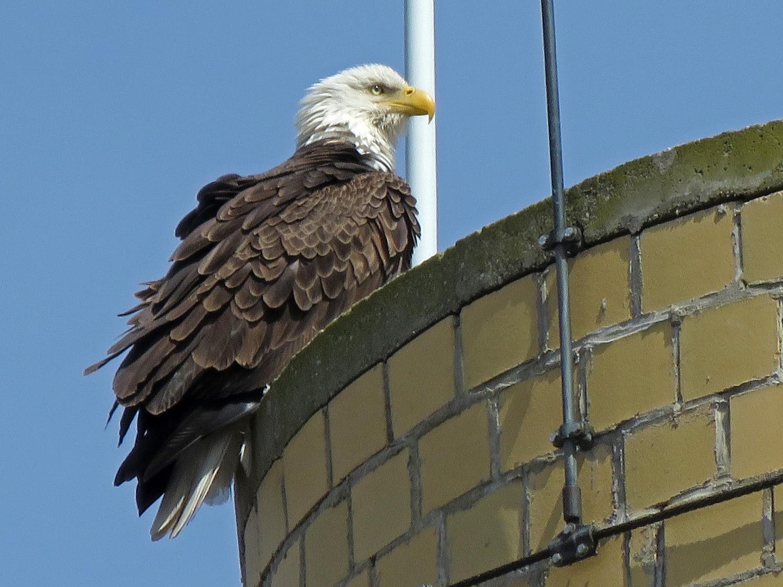 Eagle 1500 4-2-2019 SI 052P.jpg