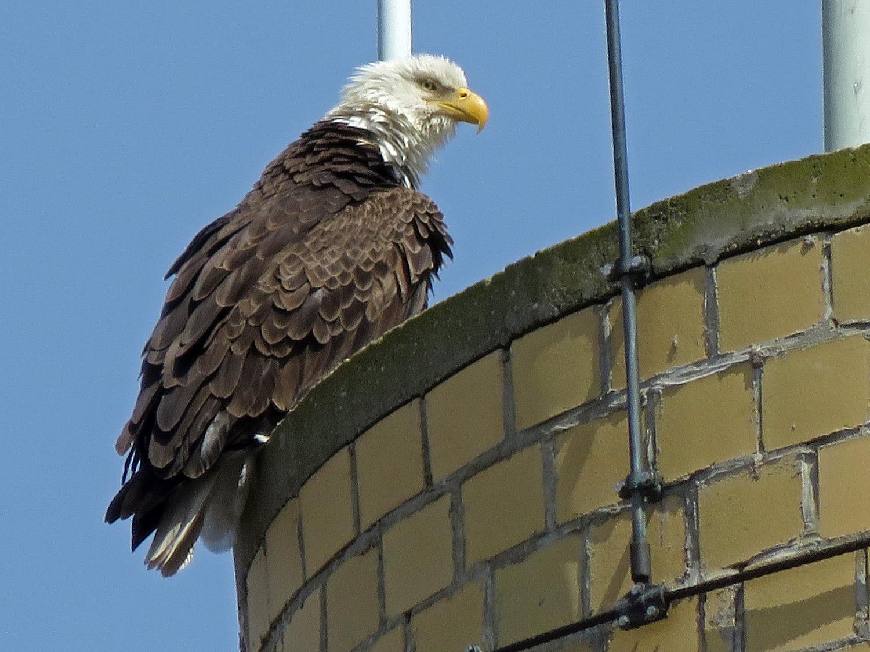 Eagle 1500 4-2-2019 SI 059P.jpg