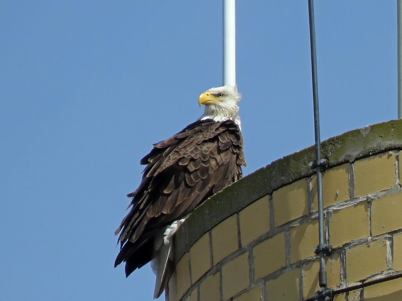 Eagle 1500 4-2-2019 SI 065P.jpg