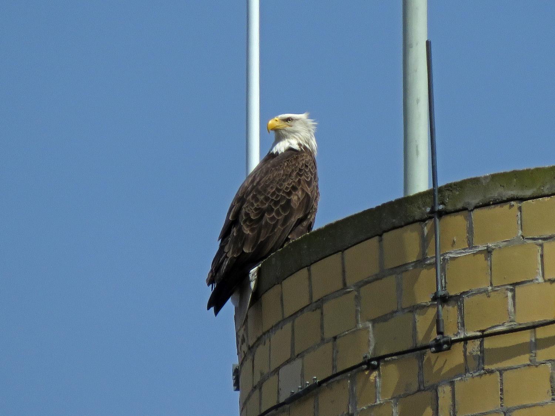 Eagle 1500 4-2-2019 SI 072P.jpg