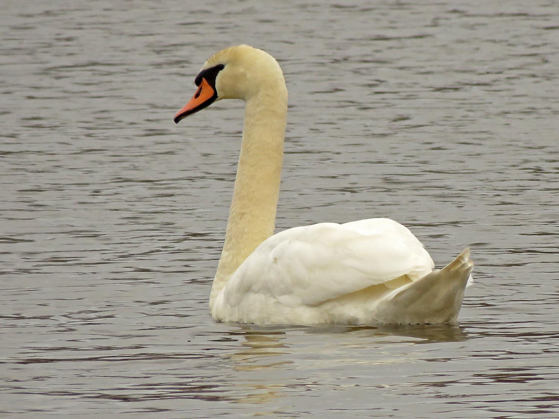 Swan 1500 4-2-2019 SI 119P.jpg