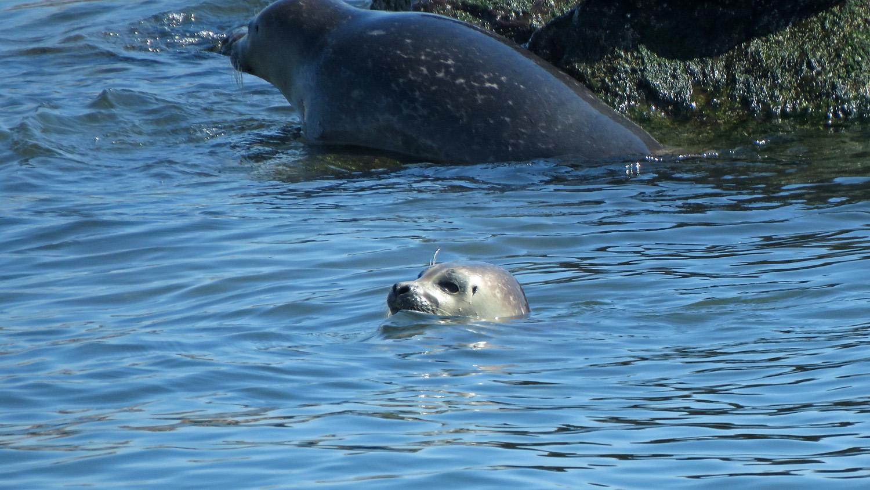 Seals 1500 4-6-2019 FT AP JB 112P.jpg