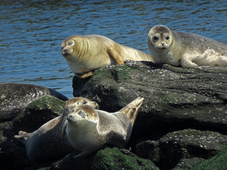 Seals 1500 4-6-2019 FT AP JB 183P.jpg