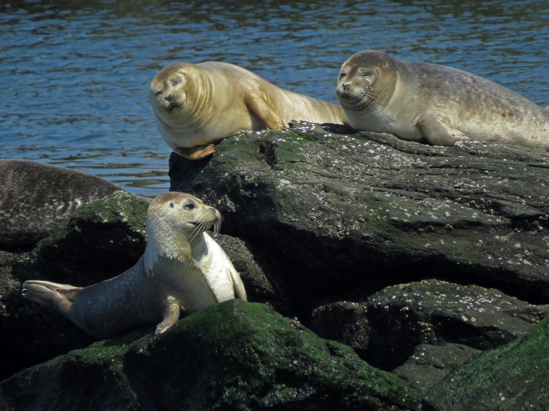 Seals 1500 4-6-2019 FT AP JB 215P.jpg