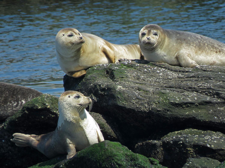 Seals 1500 4-6-2019 FT AP JB 221P.jpg