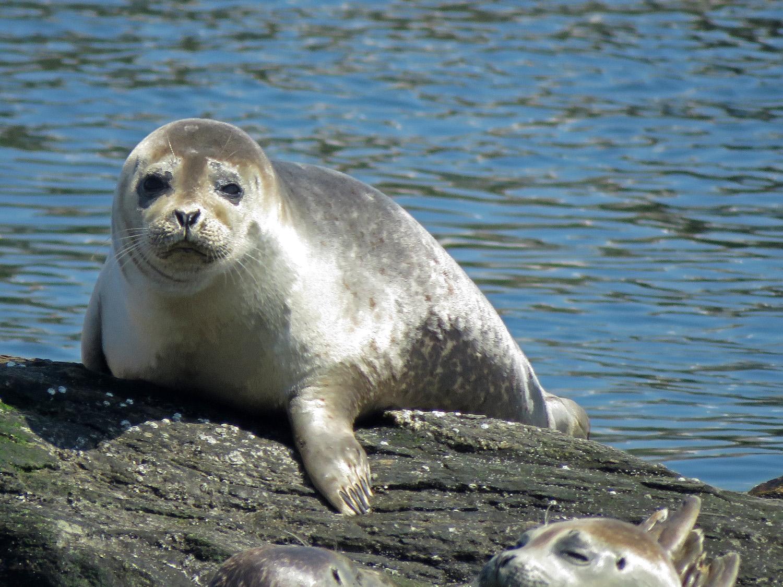 Seals 1500 4-6-2019 FT AP JB 133P.jpg