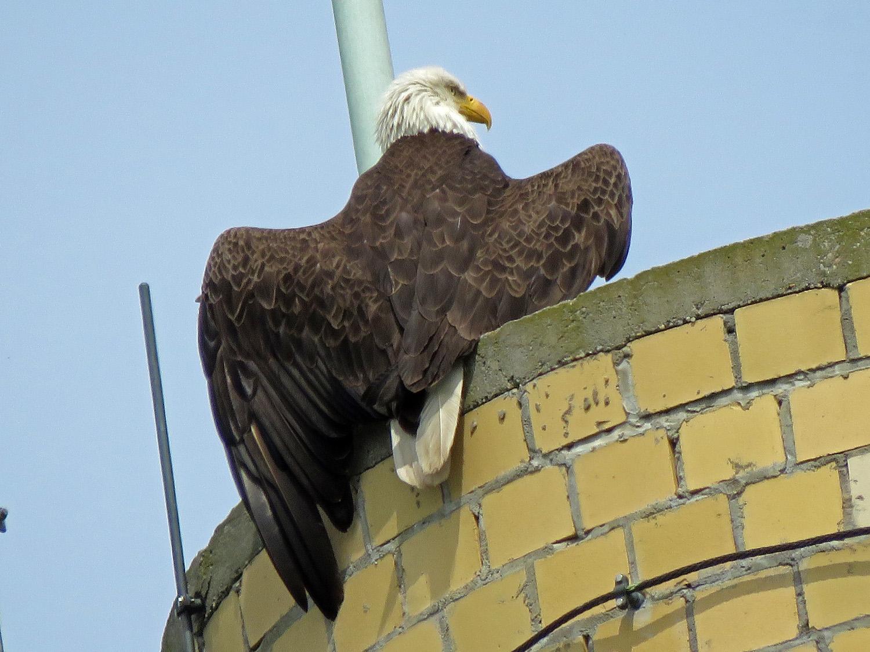 Eagle 1500 5-22-2019 SI 042P.jpg