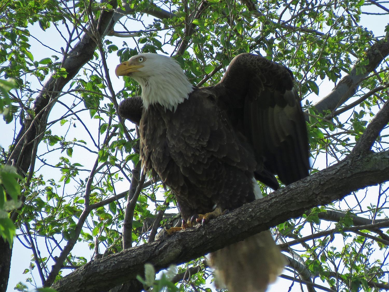 Eagle 1500 5-22-2019 SI 216P.jpg