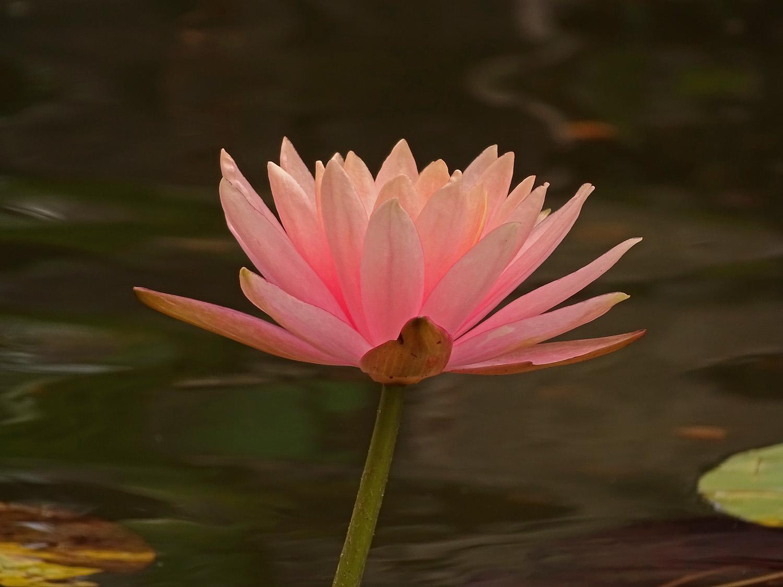 Flower 1500 7-3-2019 018P.jpg
