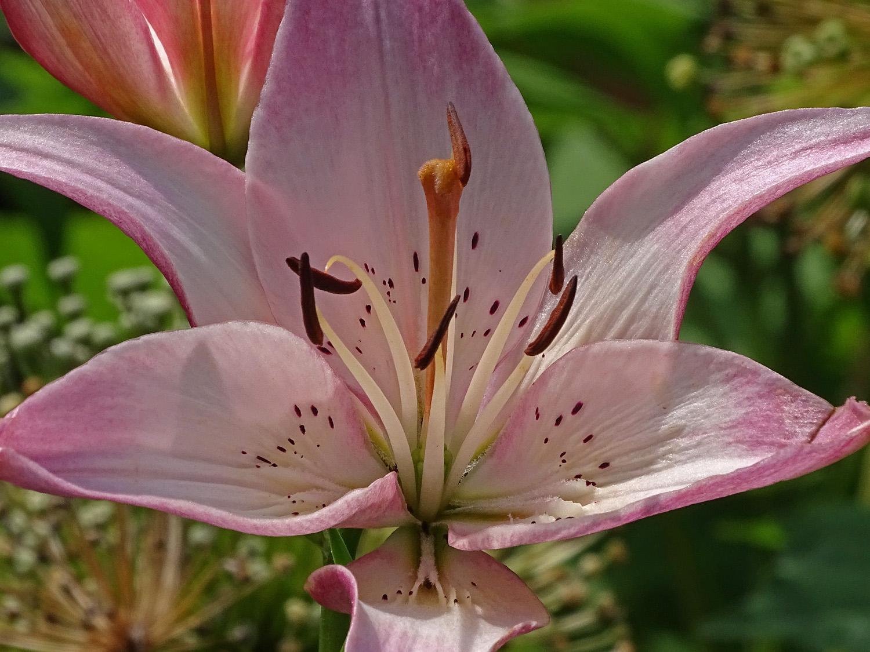 Flower 1500 7-3-2019 046PP.jpg