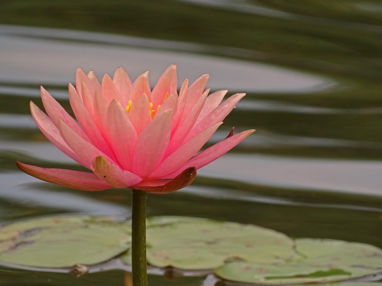 Flower 1500 7-3-2019 019P.jpg