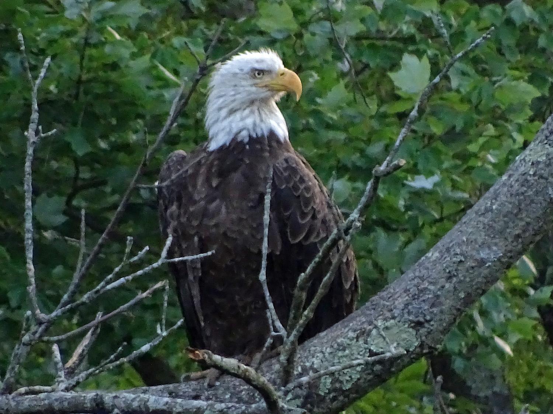 Eagle 1500 7-7-2019 SI 127P.jpg