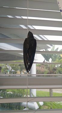 Chimney Swifts cling on the sides of things. They are not built to sit on branches