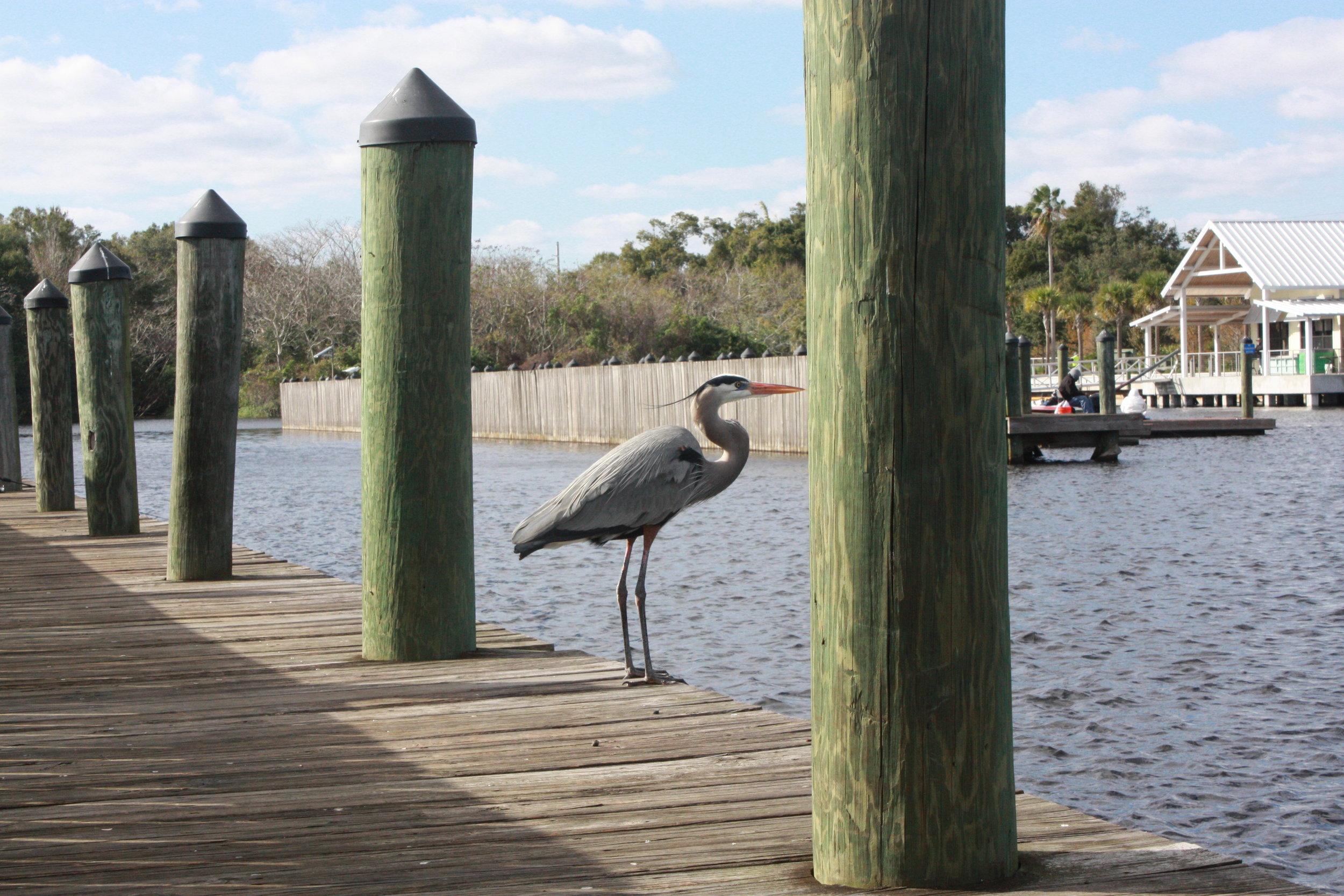 Kissimmee Lakefront Birds