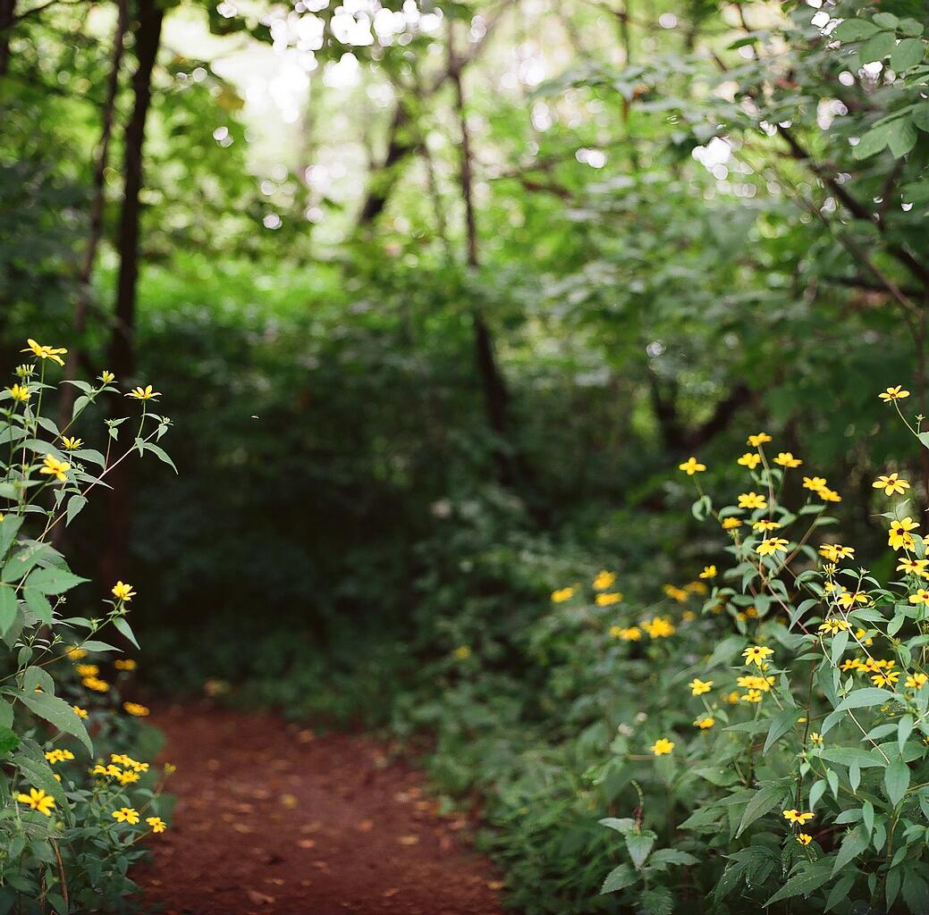 14) into the woodland, eloise butler wildflower garden in minneapolis. hasselblad 500cm + planar 80/2.8 & koadk ektar 100, the darkroom lab.