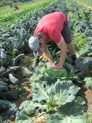 Market Manager Chris gets the freshest cabbage he can. Hello stuffed cabbage roles!