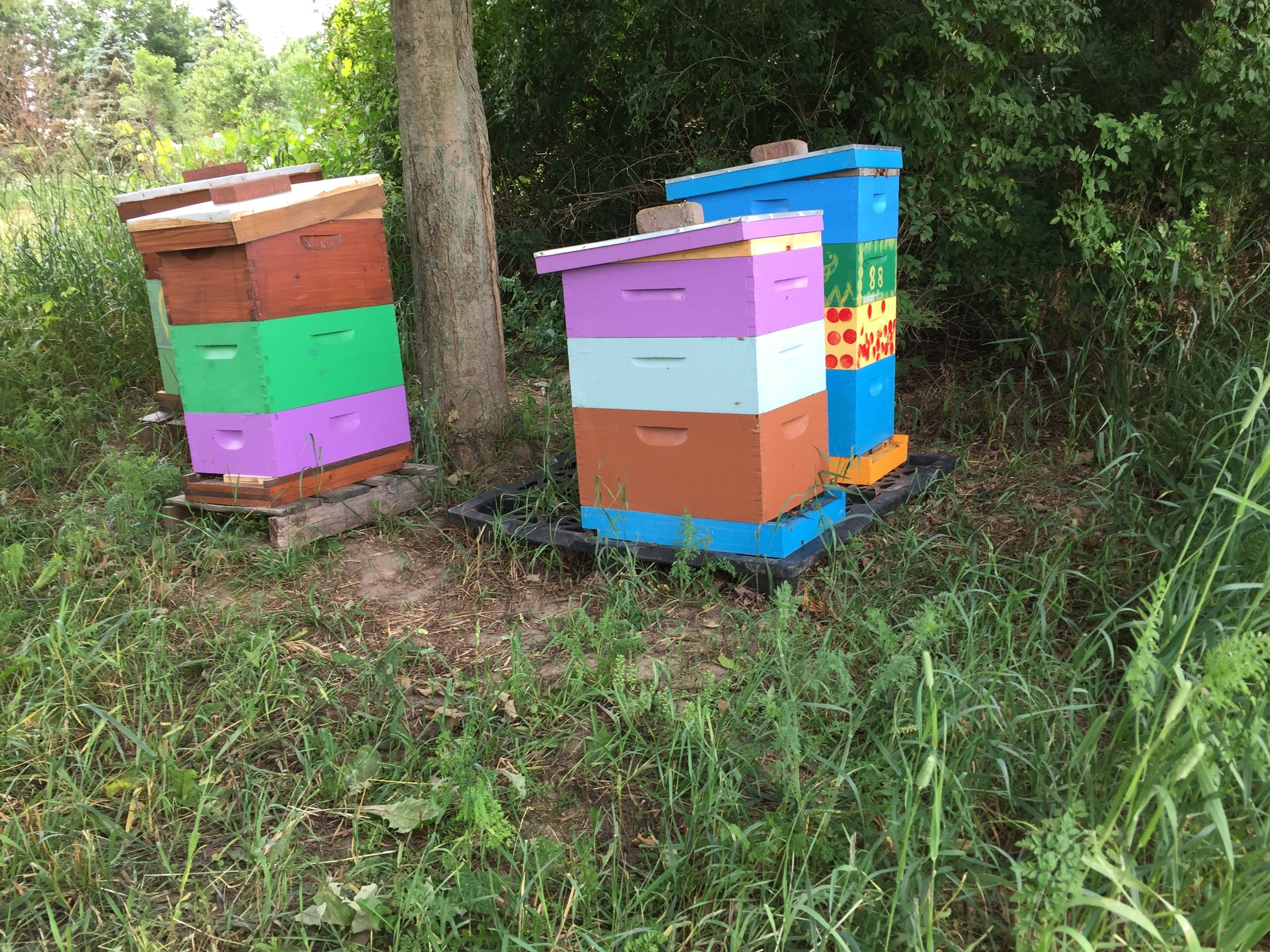 Amazing! The farm also has beekeepers.