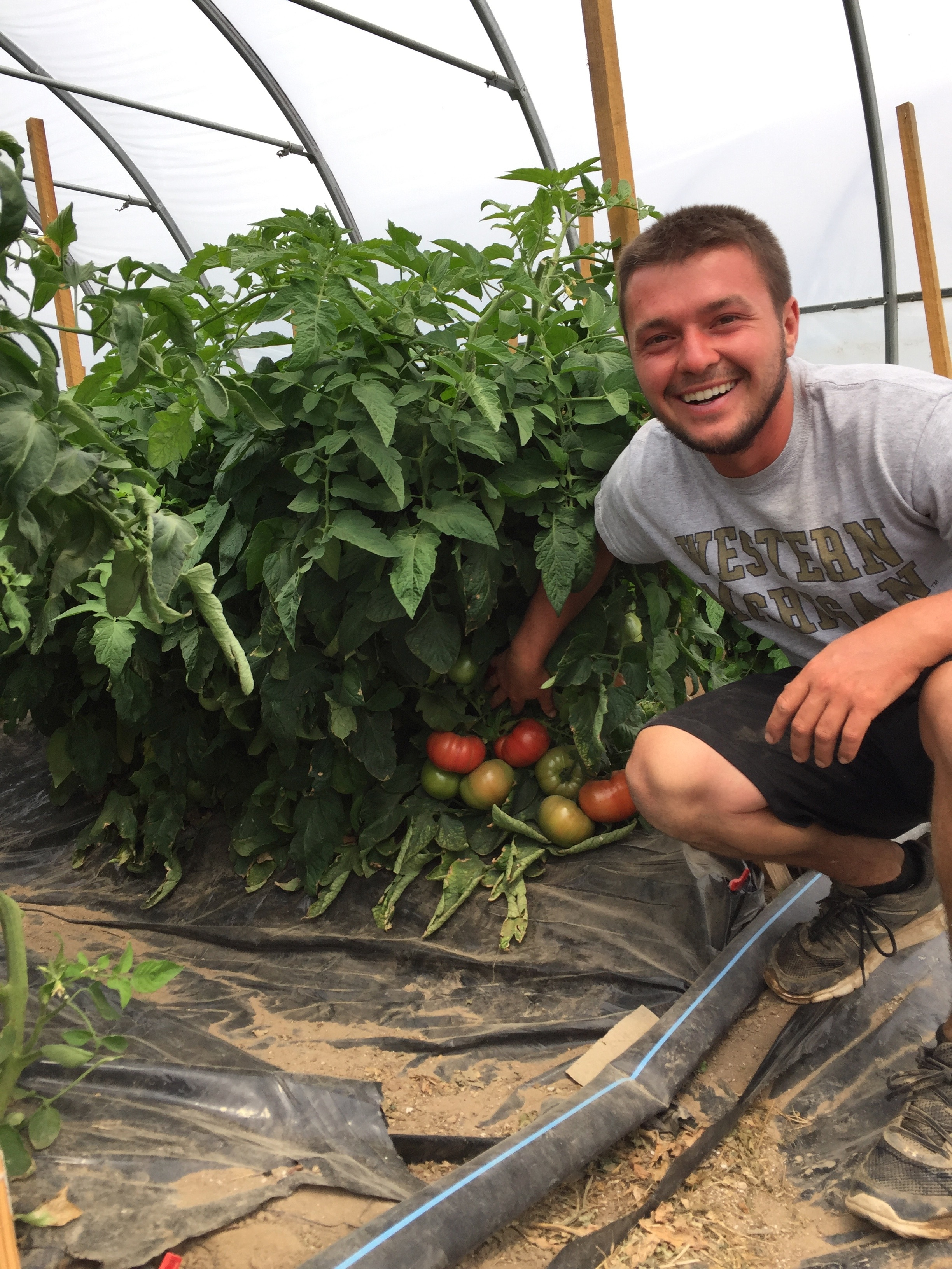 24 different types of tomatoes grown on the Soil Friends Farm.