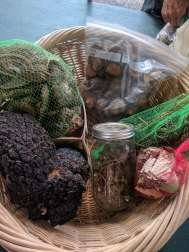 Chaga, turkey tail, and reishi mushrooms and various medicinal roots