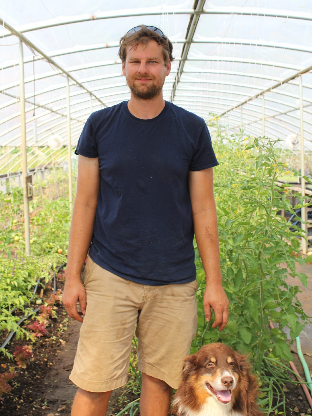Matt and Buddy in the tomato production greenhouse. July 10th, 2018.