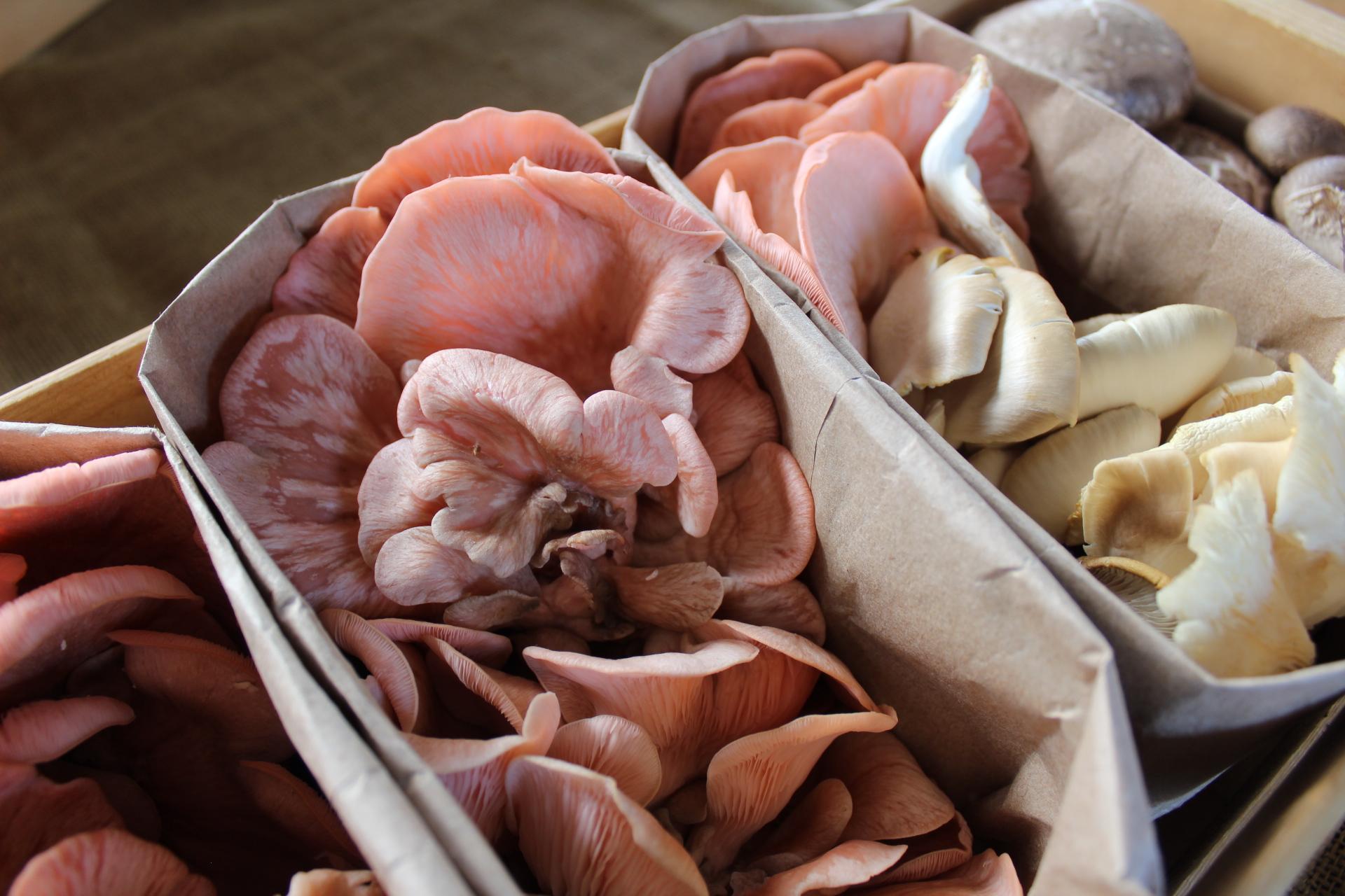 """Mycelium Marvel"" Oyster mushrooms line the Bankson Lake Farm booth at the Portage Market."