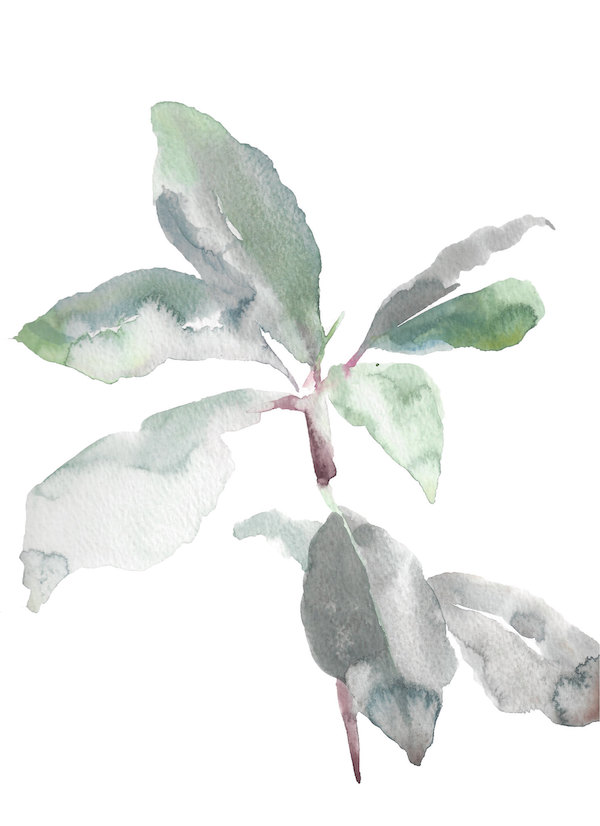 Rhododendron Study No. 4