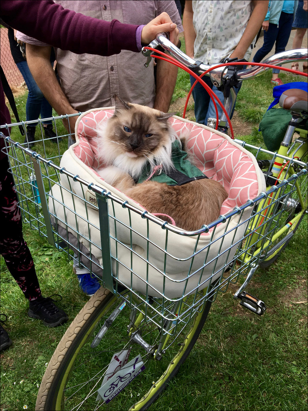 Bike basket Himalayan