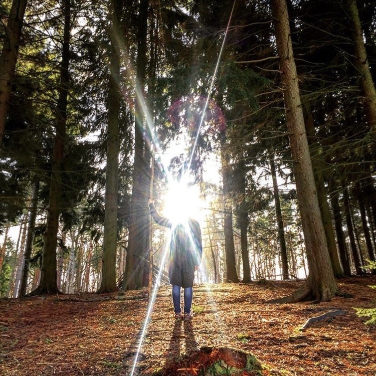 Forest Bathing with Surrey Hills Wellness