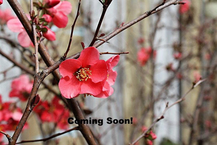 Coming Soon Photo.jpg