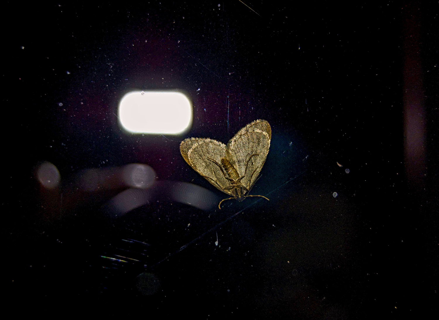 Small Moth photoFinal.jpg