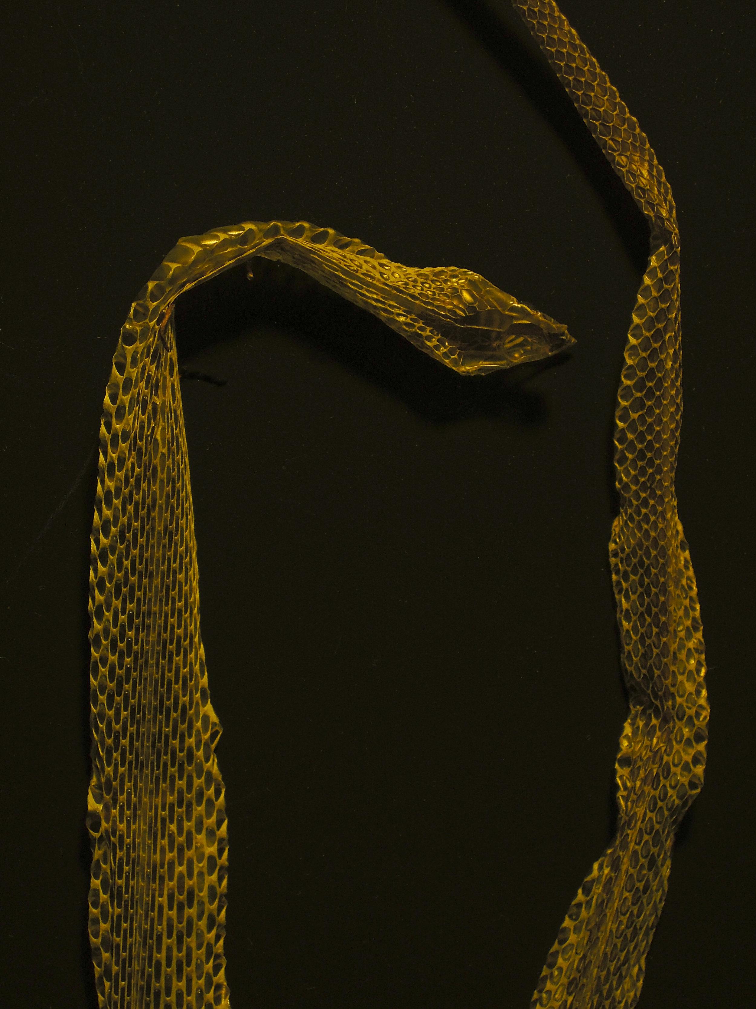 Studio Noir -  Snake Skin