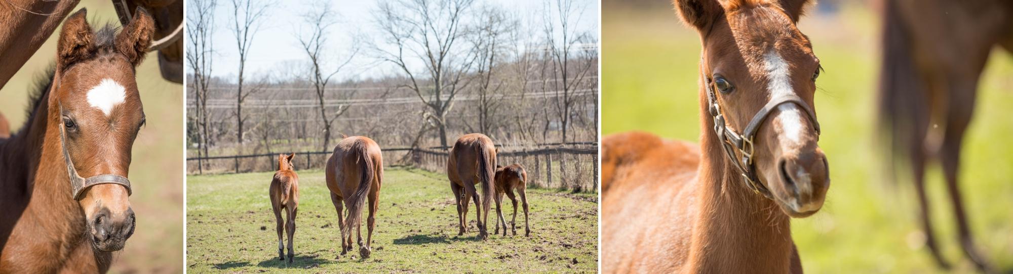 Foals 6.jpg