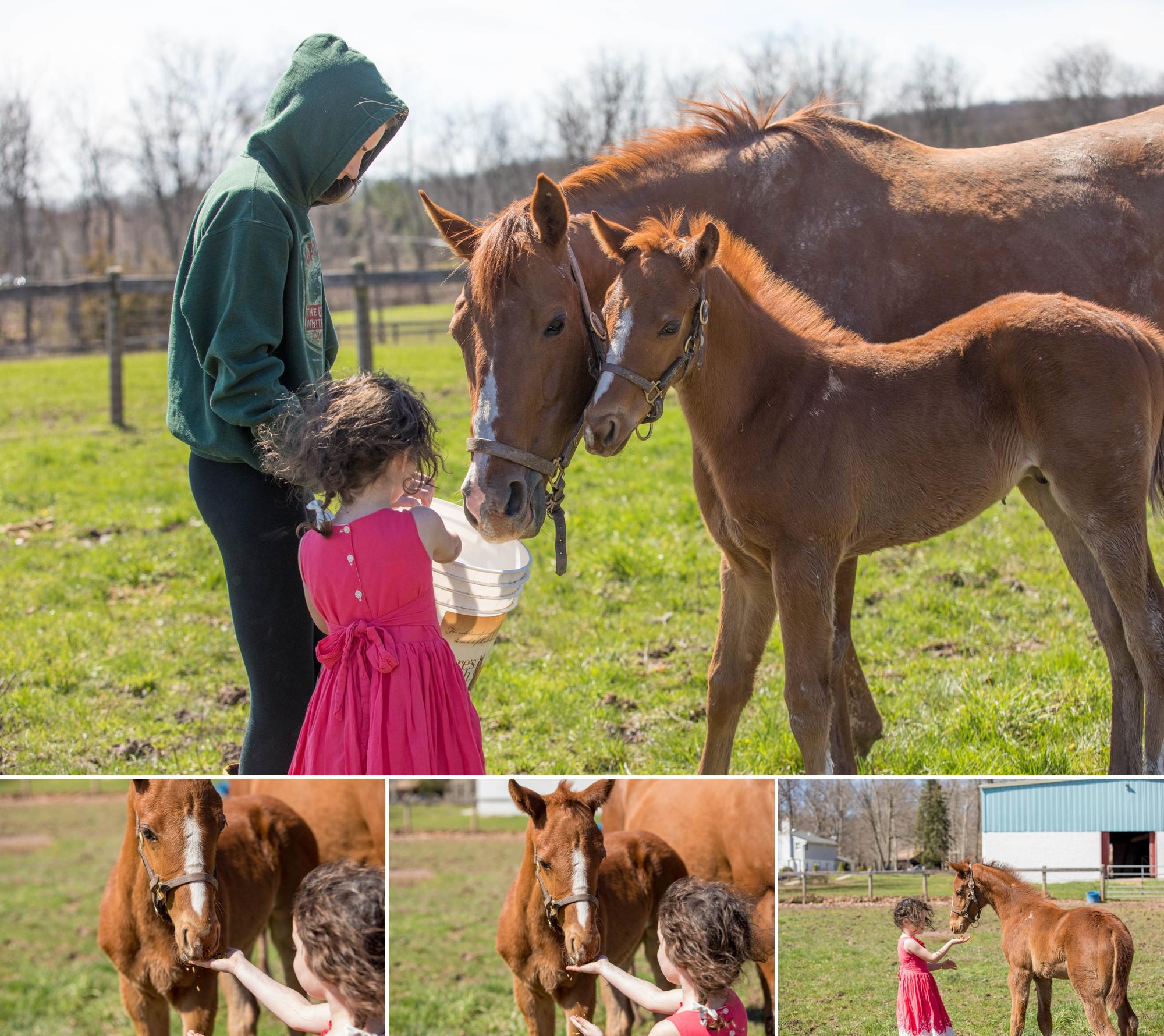 Foals 9.jpg