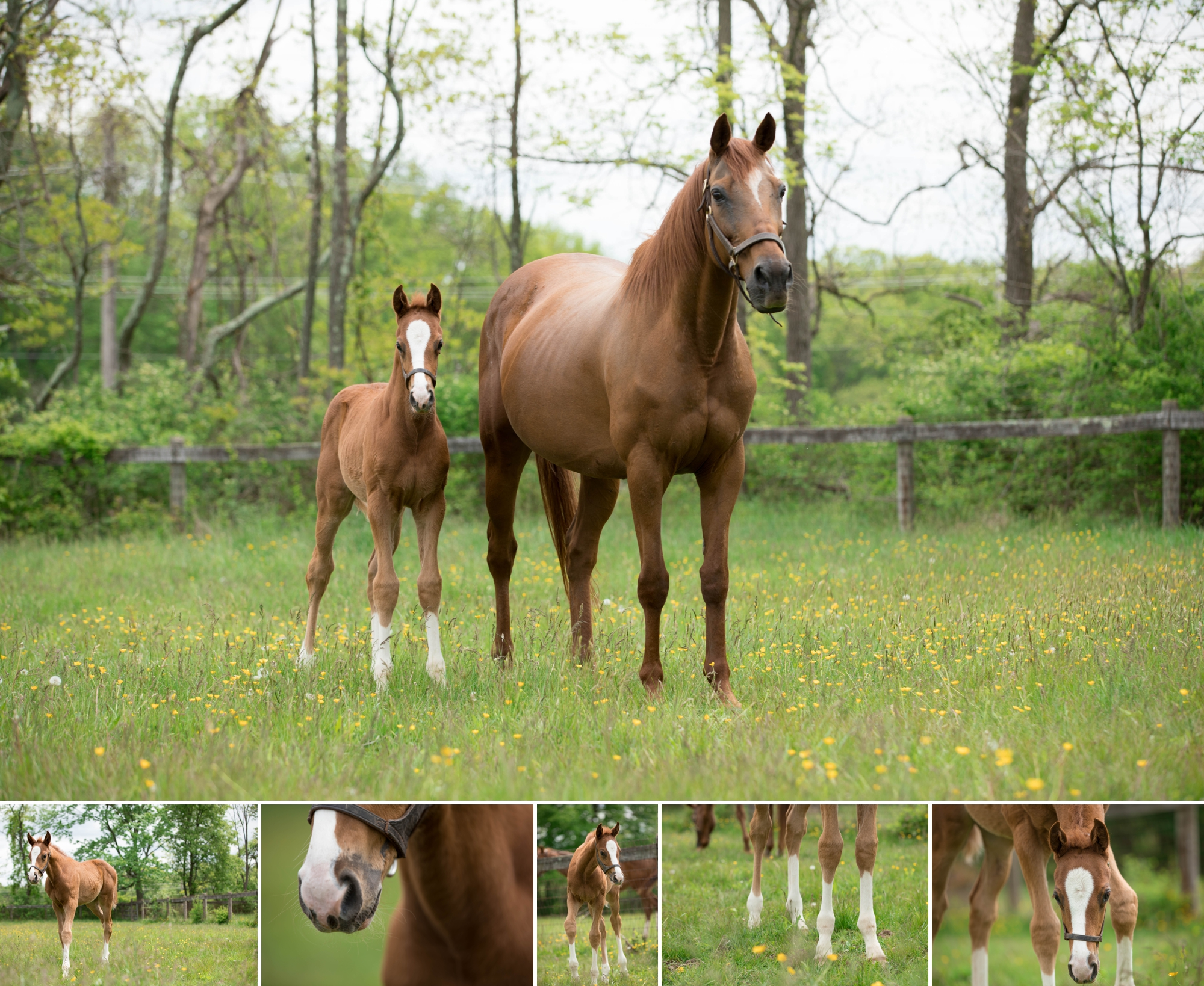 Foals 11.jpg
