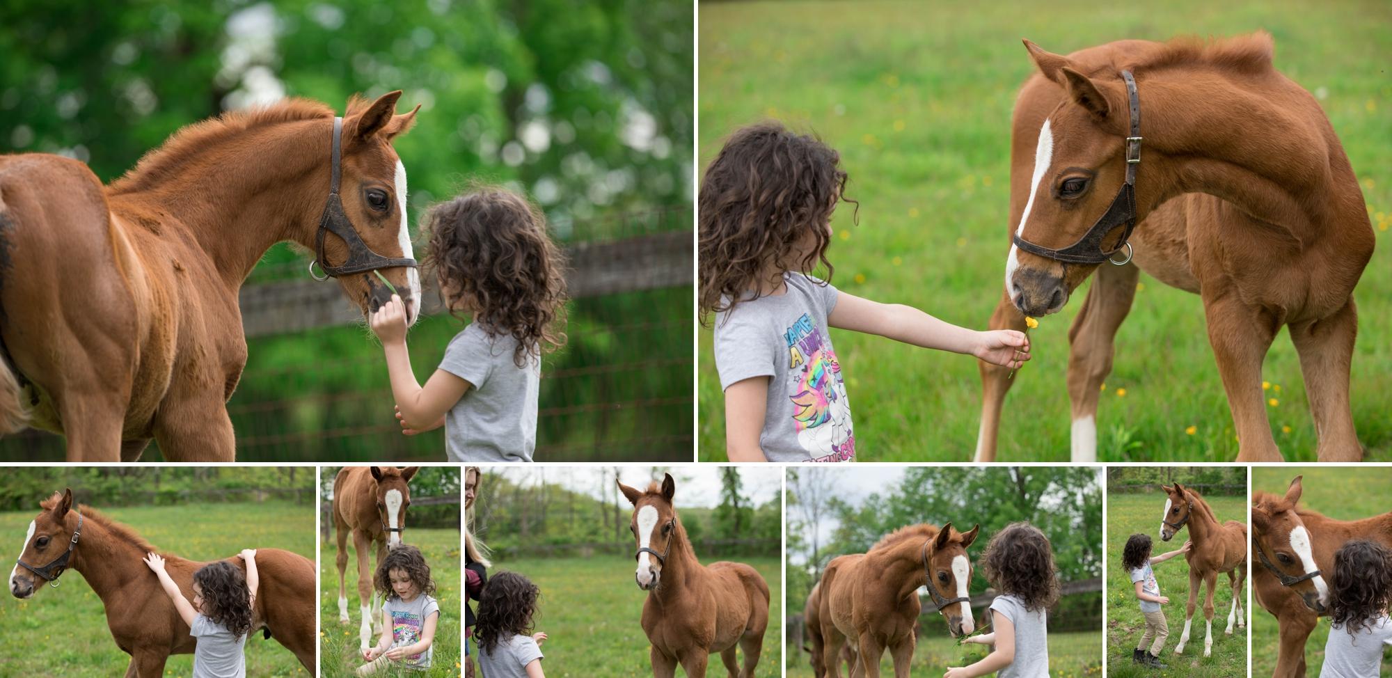 Foals 12.jpg