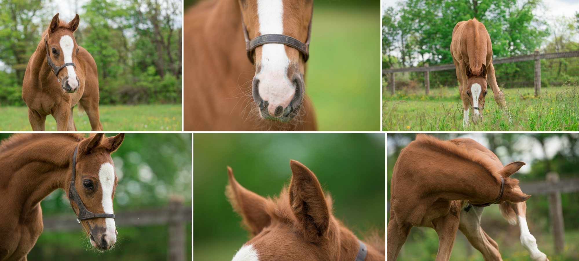 Foals 13.jpg