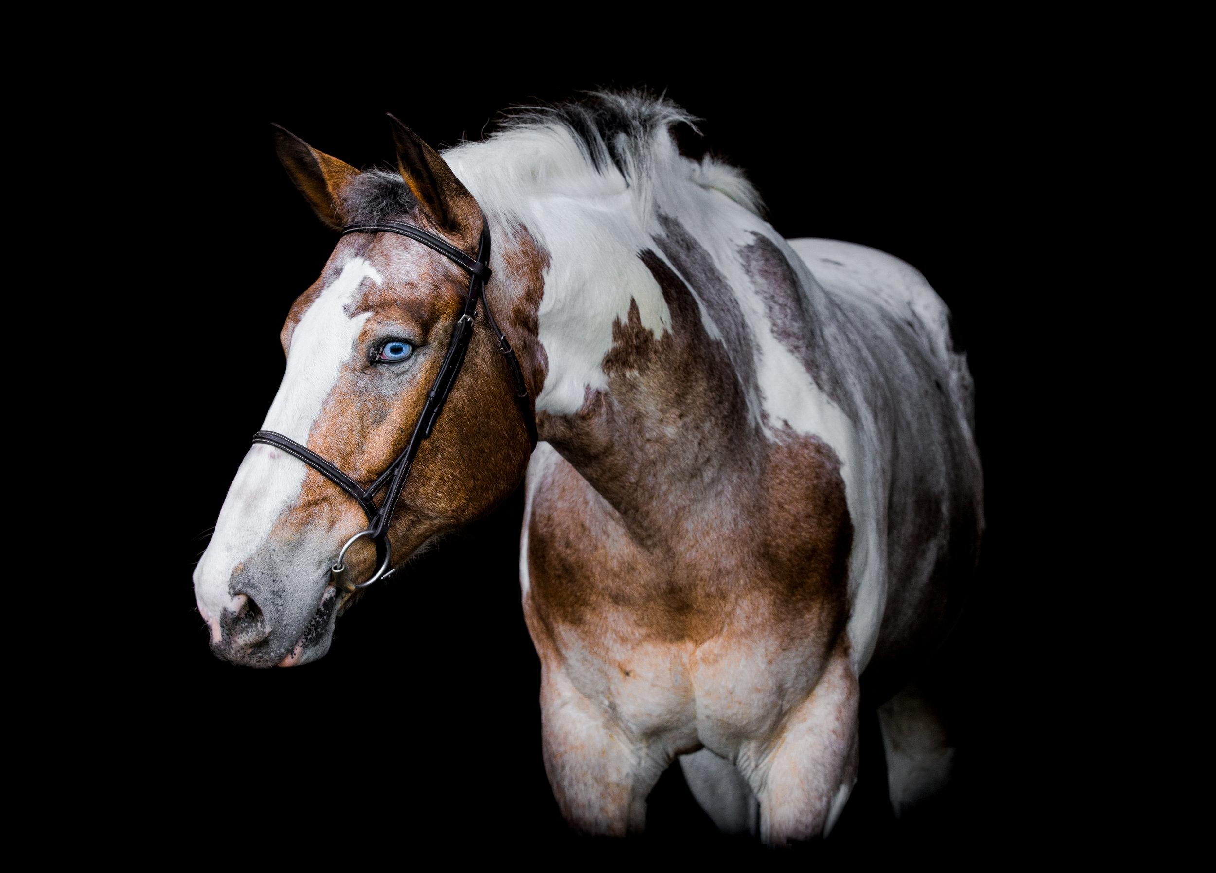 Aspen- Triangle Therapeutic Riding