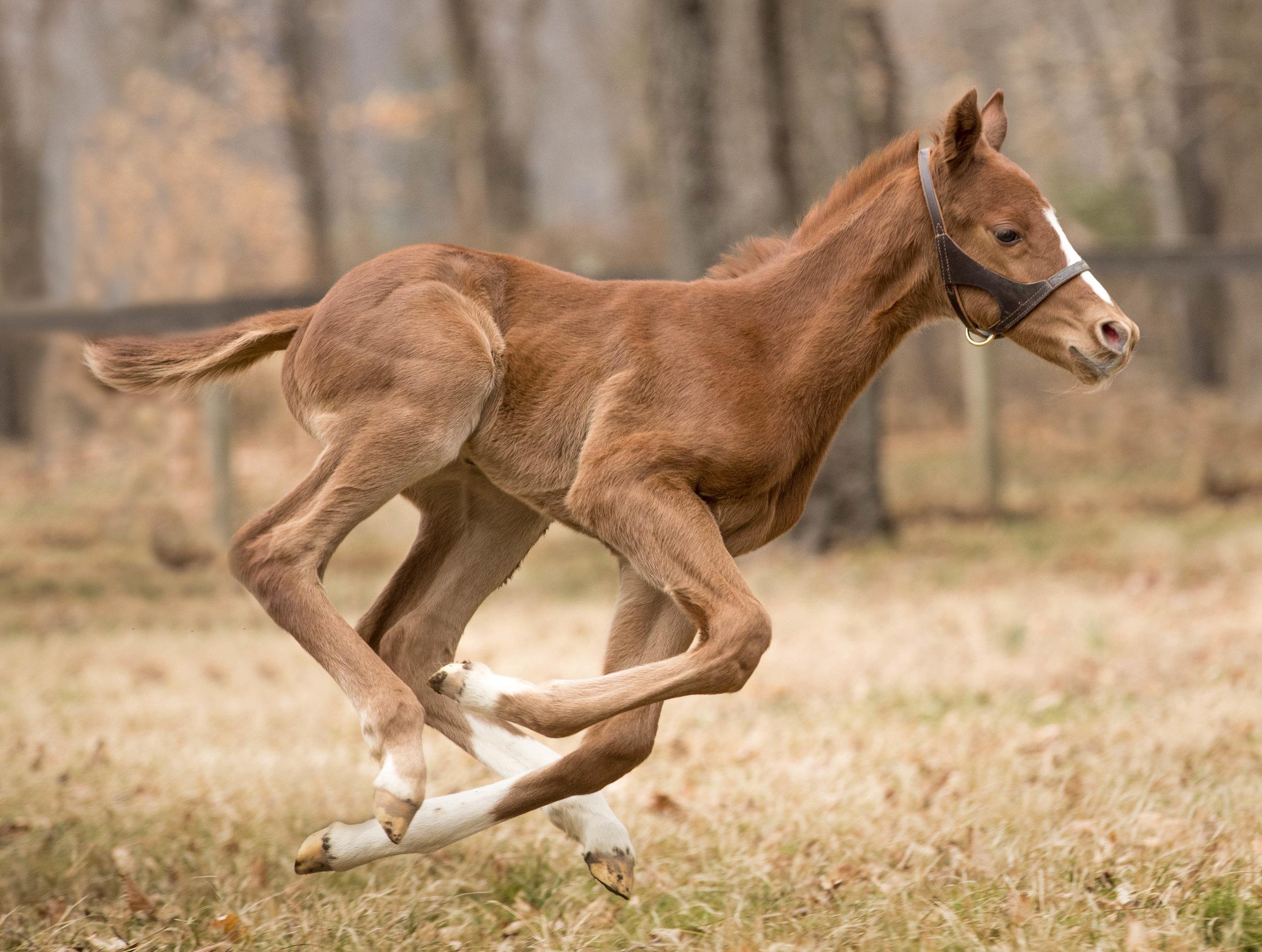 foal-.jpg