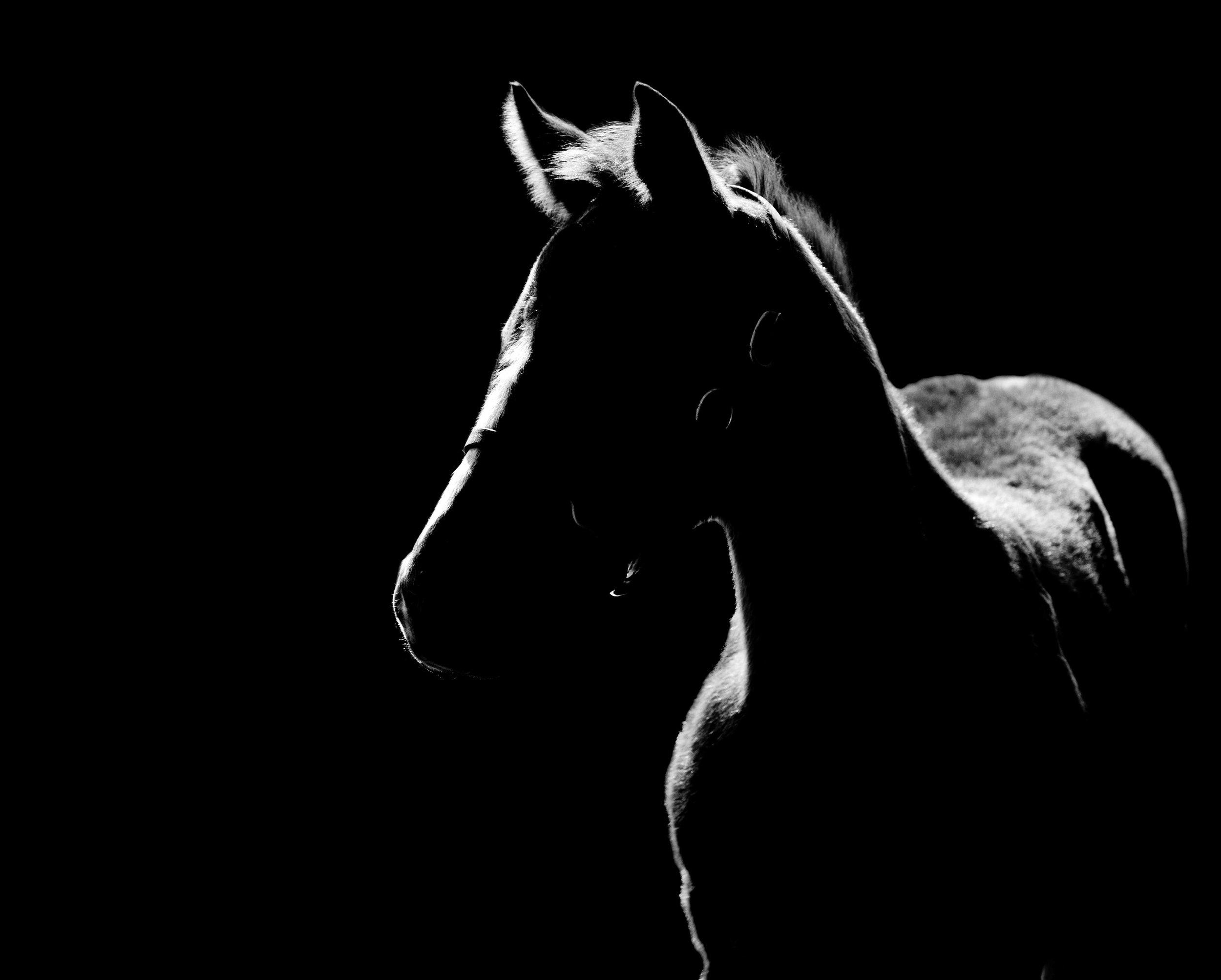foals-4981.jpg