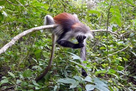 Zanzibar wildlife.jpg