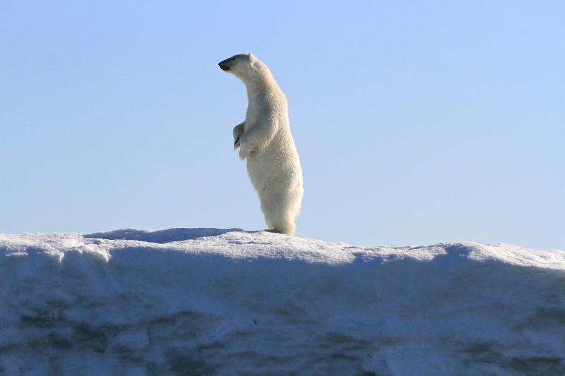 Blog Svalbard 2.jpg