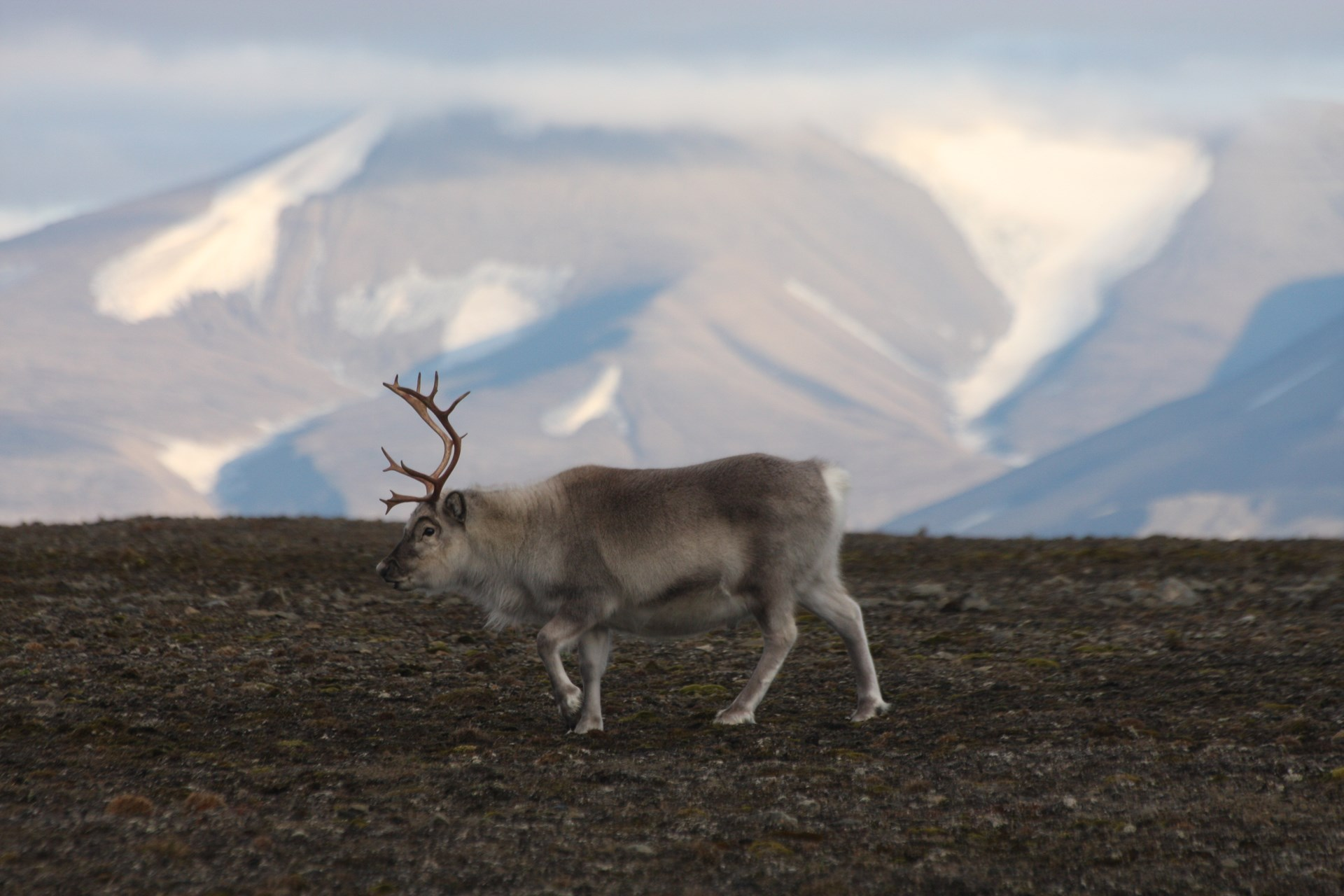 Blog Svalbard 5.jpg
