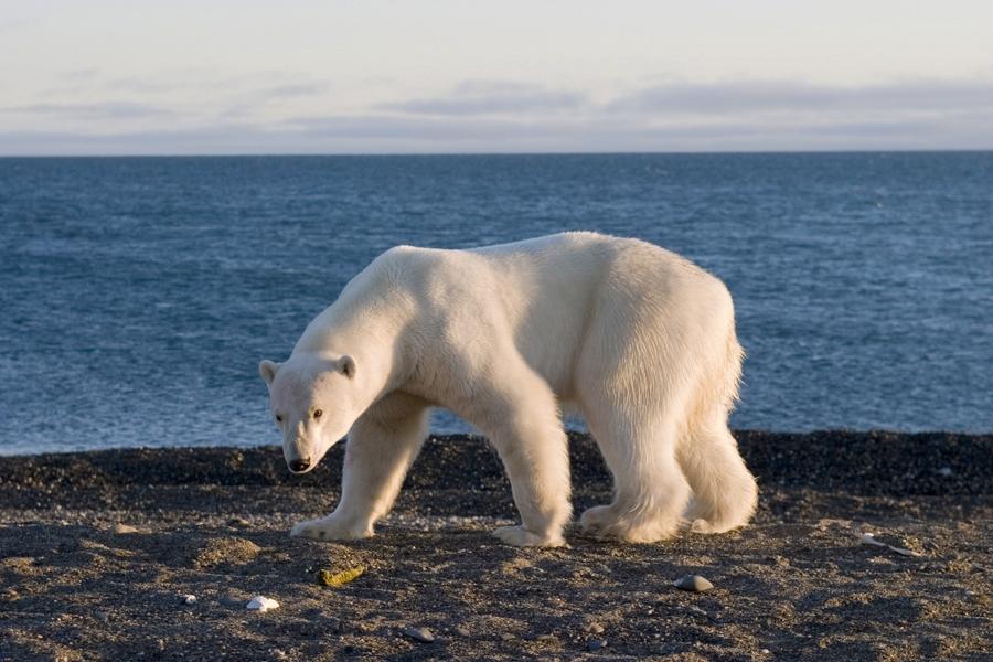 The Amazing Wild Mammals of Alaska 2.jpg