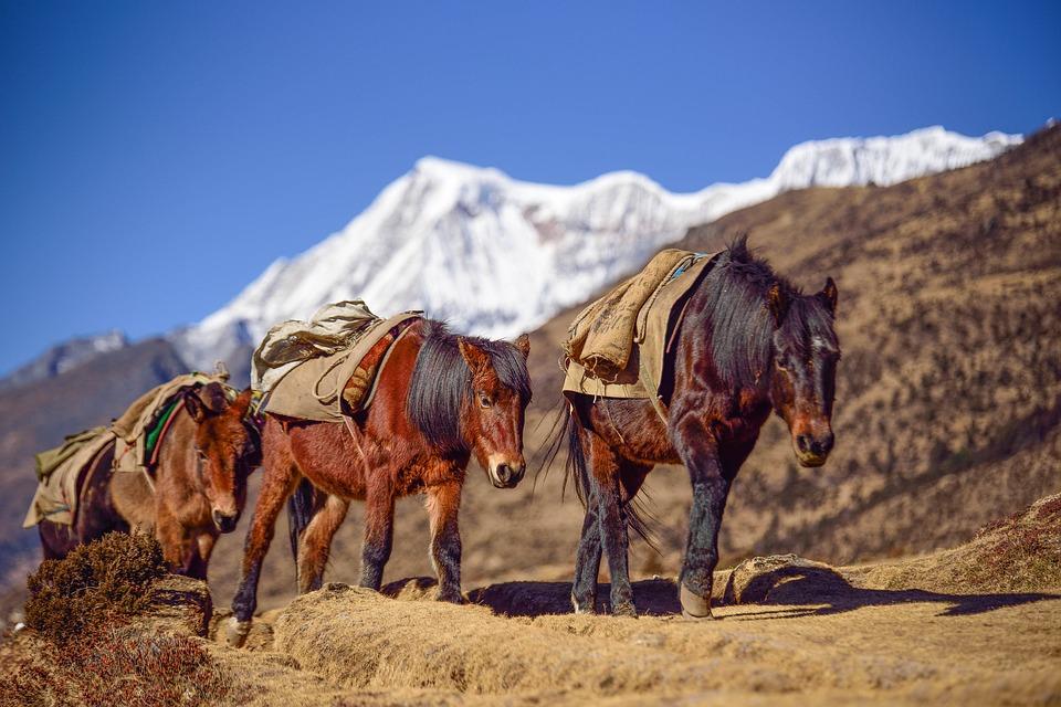Bhutan horse.jpg