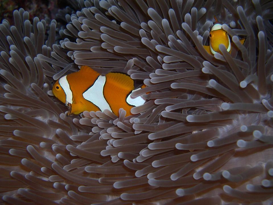 Sulawesi 1.jpg